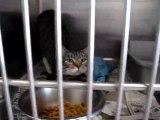 Hornell Animal Shelter #12 - kittens