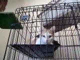 Hornell Animal Shelter #16 - more kittens