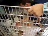 Hornell Animal Shelter #20 - cats back in cage