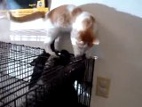 Hornell Animal Shelter #37 - kittens playing from below