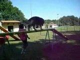 L'Agility au Bouguenais Sport Canin