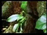 Mucizevi topluluk: karıncalar