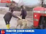 turquie:un chien tire un tracteur!!