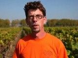 ITW Vigneron - Vendanges 2010 - Olivier Fargues