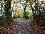 la nature ,l' automne