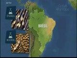 Brésil et biocarburants