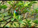 Langtang Birds Trek Package Holidays Kathmandu Nepal