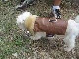 manteau chaud pour chien mode canine PETSHOP US Dog Fashion