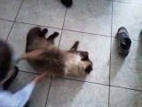 Jules : mon chat serpilliere