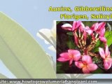 Growing Plumeria Cuttings Plumeria Plants and Tropical Plants with the Egg Method