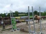 Tynymor Grand Slam, étalon Welsh Pony, franchit 1m30 c'est à dire sa taille.
