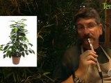 Jardinage et potager pour néophytes