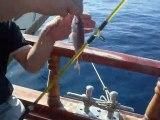 Kuşadası Mercan avı 07 11 2010 Cenk Bayraktar sülünez mercan
