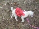 robe pour chienne à la mode canine de SAINTEPROMOS