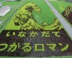 Les Rizières au Japon