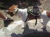 sac à dos pour chien saintepromos de Solliès Pont - Var -