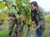 ITW Vigneron - Vendanges 2010 - Le rôle des cépages
