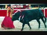 Bullfights