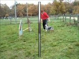 Dove agility entrainement 20 novembre 2010