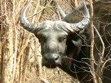 Wild Animals Captured Photos [Wild Anima Captured Photo]