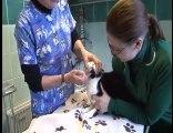 Edenbridge Veterinary Clinic -  Vets in Edenbridge