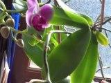 Soignez vos orchidées