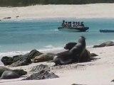 Galapagos Islands travel: Sea lions arm wrestling