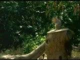 Ecureuils farceurs
