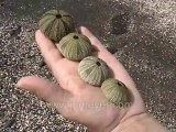 Galapagos Islands travel: A great handful of shells; 3 iguan
