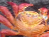 Galapagos Islands travel: Johns slideshow of Sombrero Island