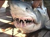 Foreign Office issues shark alert