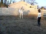 cheval psar pégase (liberté)