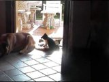Friend Should Be Friends Friendships Between Cats and Dogs