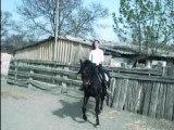 cheval carus du paou (dressage)