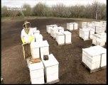 Le mystère de la disparition des abeilles (4)