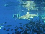 Lagon Bora Bora Requins Motu Tevairoa