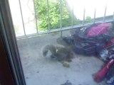 Ecureuil sur le balcon avant qu'il n'y ait de la neige