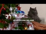 Reportage 30 millions d'amis