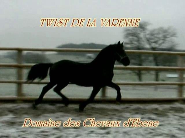 Twist de la varenne, cheval arabo-frison en liberté