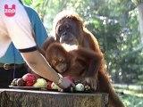 Tiny Baby Primates