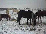 1er JOUR DES VACANCES DE NOEL AU PONEY-CLUB: neige! SDC14624