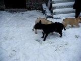 les boulis dans la neige