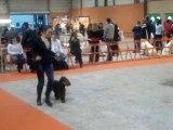cocker anglais exposition canine Nantes 2010