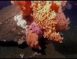 Scientists Warn Ocean Acidification Destroying  Corral