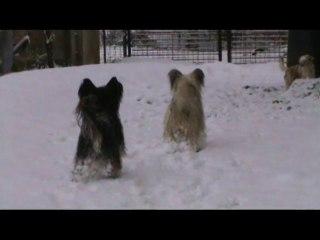 Vidéo Houppettes de Noel