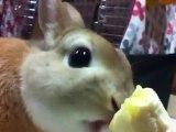 Lapin trop mignon mange une banane au Japon [Lol Rabbit]