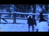 élevage Acamel PRE Andenne Belgique - poulains neige