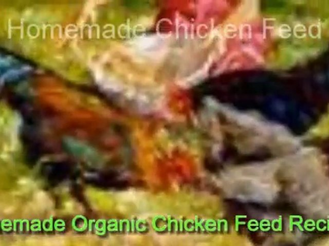 Homemade Organic Chicken Feed