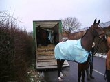 Soins aux chevaux HUNTING BOXING DAY