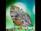 Muhteşem Böcekler! - Video Dailymotion